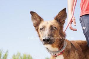 Tasio busca hogar en adopcion