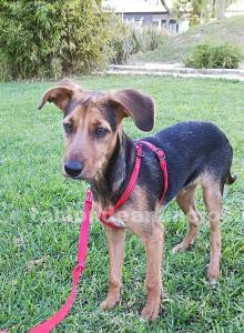 Cachorro 3 meses. Luca.