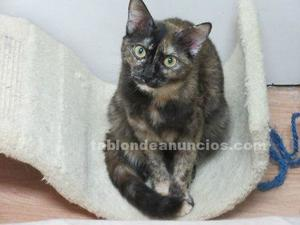 Lovely carey en adopcion