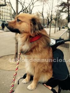 Se regala perro por no poder antender