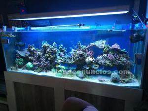 Urge vender acuario marino