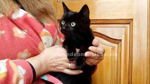 Gatitos abandonados, dos bebés negros y la mamá