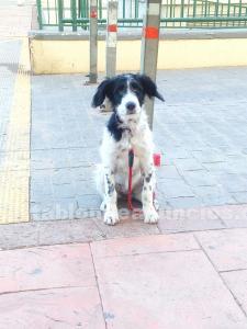 Regalo cachorro de 3 meses y medio