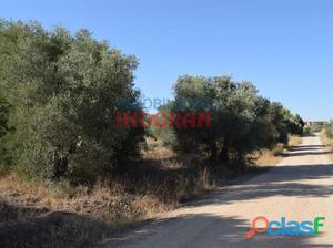 Finca agrícola a 150 m del municipio (Cáceres,