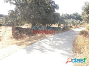 Finca agrícola (olivar) a 200 m del municipio (Cáceres,