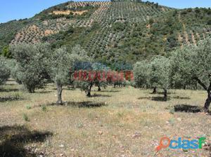 Finca agrícola (olivar en plena producción) en Los Ibores