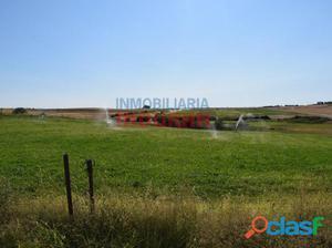 Finca de regadío a 1 km del municipio (Cáceres,