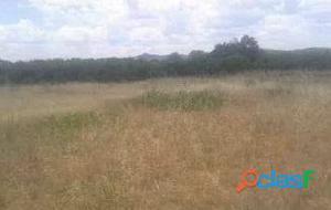 Terreno agrícola a la venta en Rafelcofer. OPORTUNIDAD