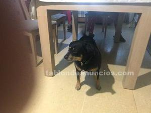 Zeus, perro en adopción madrid (nac.)