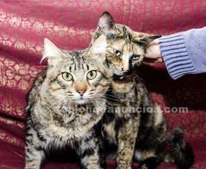 Pareja de gatos buenisimos en adopcion