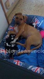 Cachorrito de 1 mes y medio