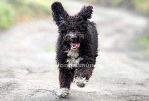 En adopción por no poder atender 3 perros en torrox