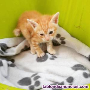 Camada de bebes gatunos en adopcion
