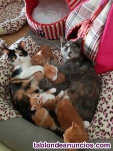 Regalo gatitos de un mes