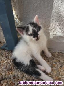 Regalamos gatito