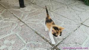 Regalo gatitos de 1 mes