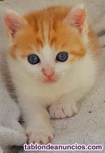Vendo gatito