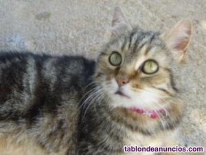 Cleo busca hogar en adopcion