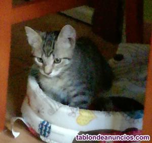 Regalo gato de dos meses y medio