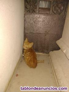 Gatito necesita hogar