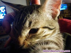Regalo gato