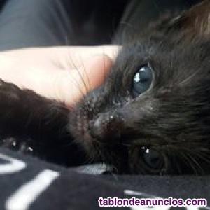 Kimba (nacimiento mayo ). Próximamente en adopción
