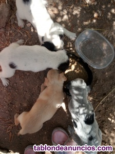 Regalo 3 cachorros