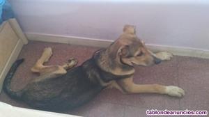 Regalo perro de 4 meses