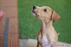 Regalo cachorrita preciosa de tres meses