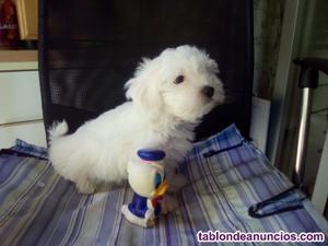 Vendo muñecos de goma para perros y de regalo un bilchon
