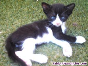 Gatitos en adopción o se regalan, nacidos el 30 de junio.