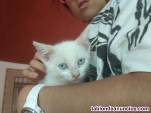 Gatitos en alcorcón