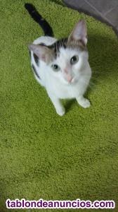 Adopta gatito