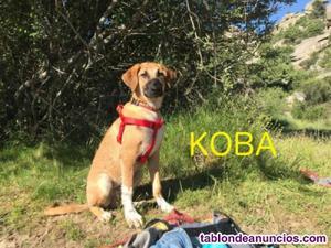 Koba,cachorrita en adopcion responsable