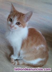Regalo gatito de 3 meses