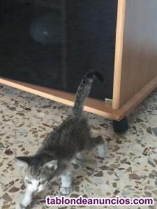 Regalo gatito 1 mes