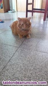 Regalo gato angora