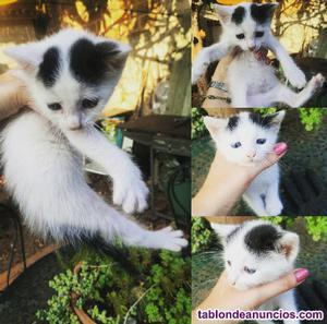 Urgente: regalo gatito abandonado