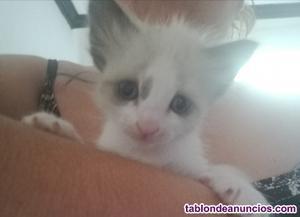 Se regalan gatitos de un mes de vida urge!!