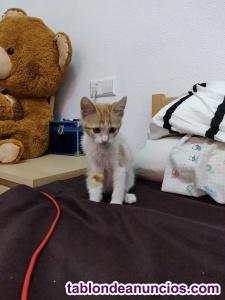 Se da en adopción a gatita