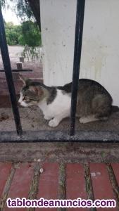 Gatos mansos en la calle