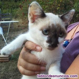 Regalo gatos. Gatitos gratis buscan hogar