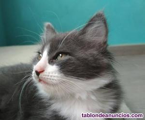 Gatitos de dos meses en adopción