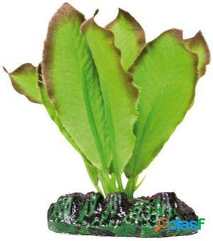 Aquatic Plants Planta de Seda Anubias 94 GR