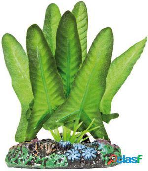 Aquatic Plants Planta de Seda Syngonium S 94 GR