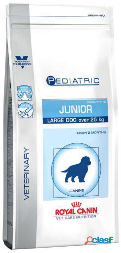Royal Canin Pienso Pediatric Junior Large Dog 4 KG