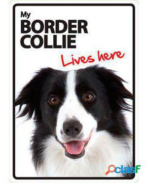 Magnet & Steel Señal A5 My Border Collie Lives Here 100 GR