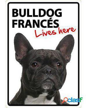Magnet & Steel Señal A5 My Bulldog Francés Lives Here 100