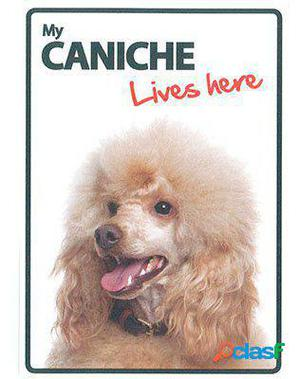 Magnet & Steel Señal A5 My Caniche Lives Here 100 GR