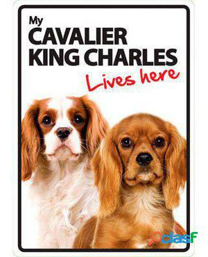 Magnet & Steel Señal A5 My Cavalier King Charles Lives Here
